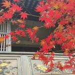 pinglè czyli szara chińska jesień